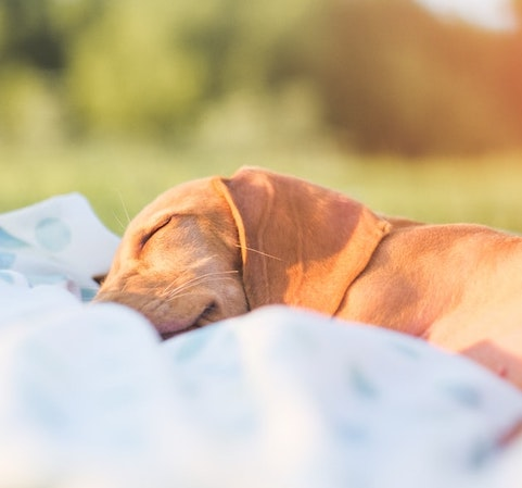 Every dog knows the importance of sleep: simple tips to help you become 'more dog'